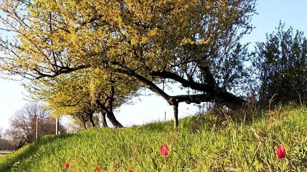 Parchi e biodiversità Sponda Tulipani Parco della Chiusa Casalecchio di Reno